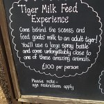 Feed Tigers Milk Experience | Premium Pricing | Isle of Wight Zoo