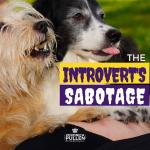 Introvert Sabotage FB Post